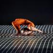 Fonderie Limone Moncalieri,  28-29 ottobre 2015, va in scena PIXEL, direzione artistica e coreografia MOURAD MERZOUKI